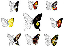 Grafik Butterflies