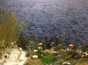 Pilzwelt der Nordseeinseln