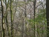 Alte hohe Bäume