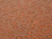 Feenkreise - wasserspeichernde Ökosysteme